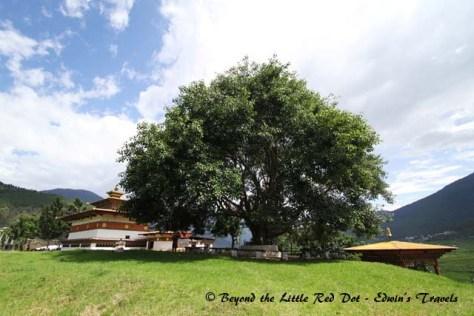 bhutan_bohdi_tree
