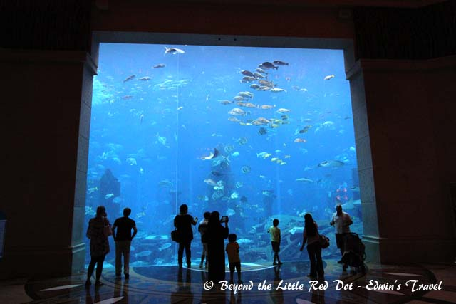 Of course there is the huge aquarium.