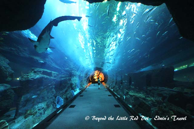 You can walk through the underwater tunnel that runs through the aquarium.