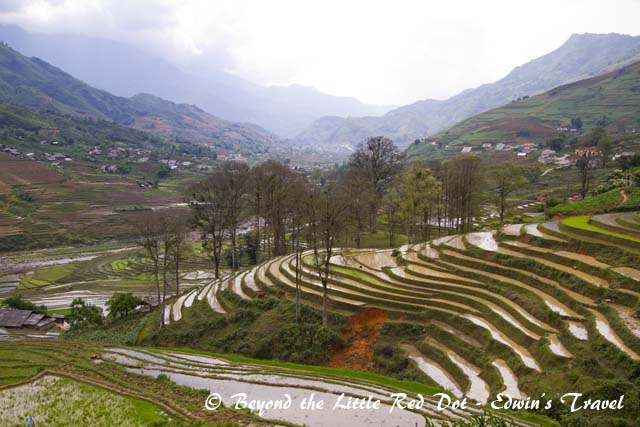 sapa_rice_terraces