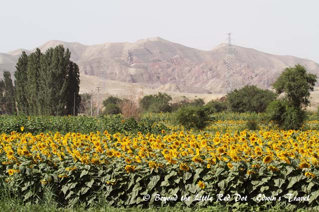 Sunflower farm along the way to the Heavenly Lake. The seeds are used to make sunflower oil.