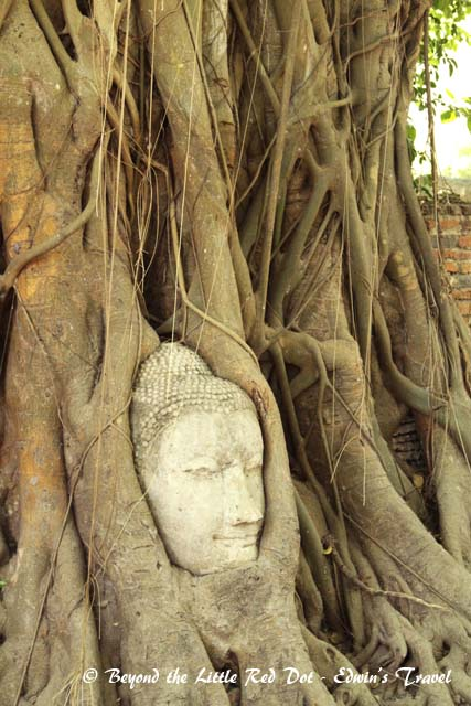 Wat Mahathat is famous for the Buddha head in the tree.