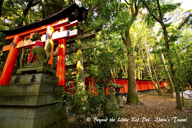 It's tori gates form walkways that meander in the hill behind the shrine. The fox is the symbol of Inari and you can find statues of foxes scattered all around.