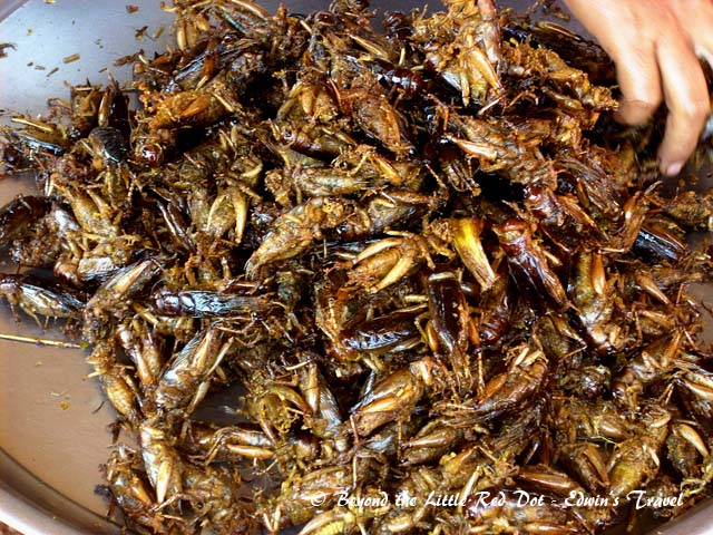 Fried locusts. Quite common in some other countries like Thailand too.
