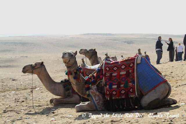 A camel ride was also included.