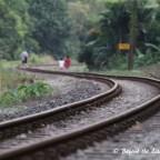 Green Corridor (Former KTM Railway Tracks)