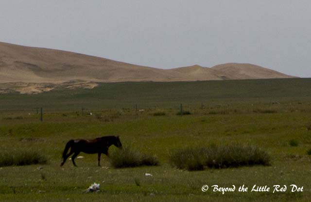 The area where we were was surrounded by sand dunes and grasslands.