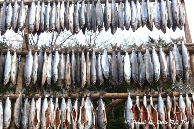 Fishing is one of the main activities of the Ainu and they salt and dry the fish in the open.