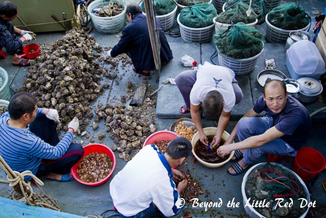 We passed by this boat of guys processing scallops. The scallops will be dried and made into conpoy.