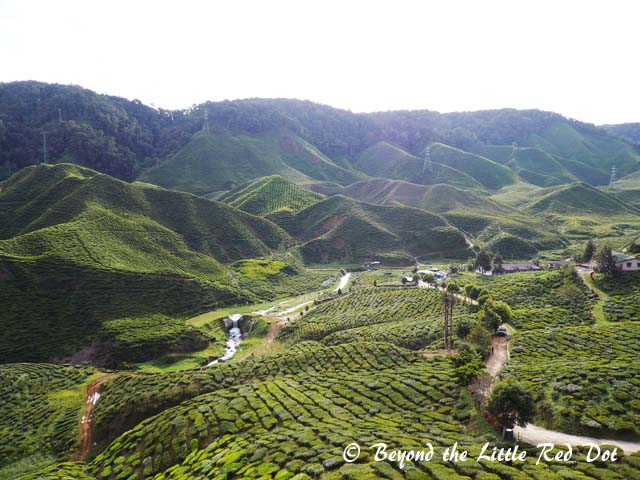 Tea plantations are the big draw for tourists. You get to see how they harvest, dry and process the tea leaves.