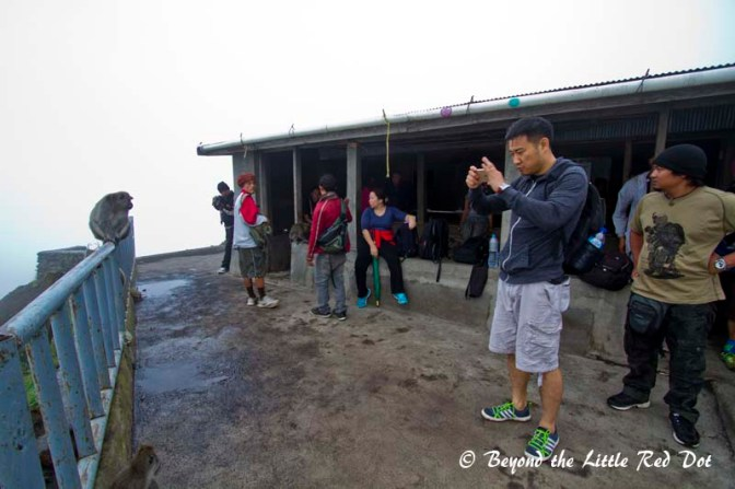 We finally reached the rest point at the crater of Mt Batur. Monkeys were everywhere.