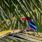 Bird Watching in Ubud, Bali