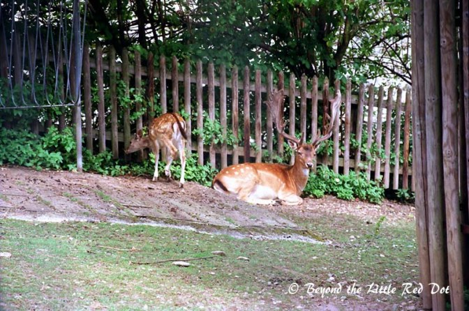 There is a small deer farm or zoo beside the falls.