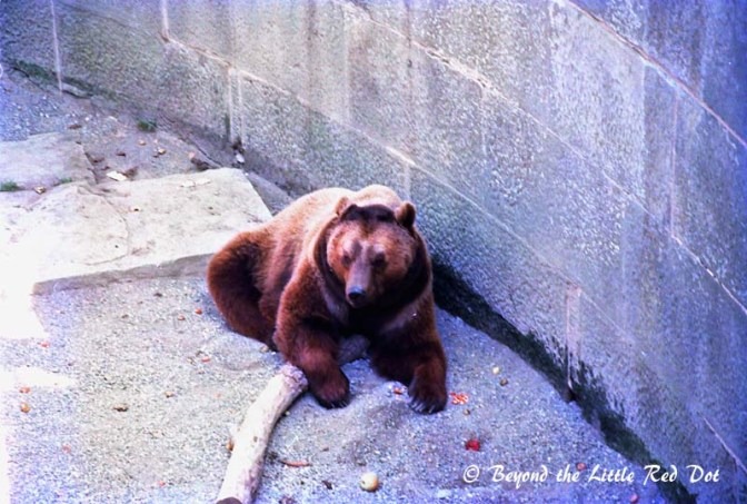 Bears are heraldic emblem of the city and there is bear pit that houses the city's bears.