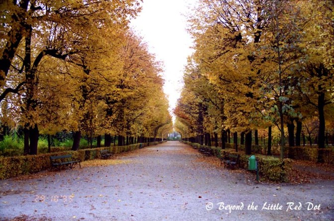 The wonderful autumn scenery in Vienna.