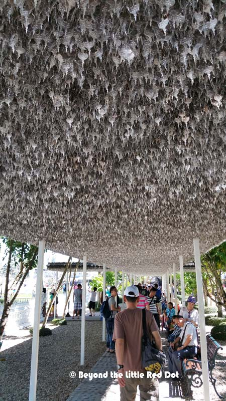 An interesting roof for a walkway. Thousands of silver leaves hand from the roof of the walkway.