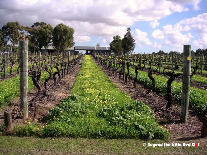 We visited a vineyard. But as it was winter, the harvest was long over and bare vines could only be seen.