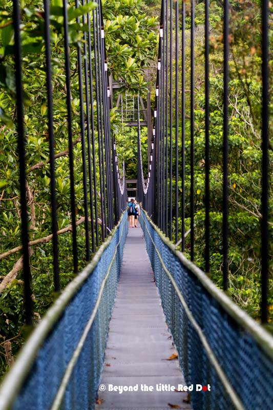 The suspension bridge is 250m long and is 25m above the forest floor. It's quite narrow, just enough for 2 people to squeeze sideways.