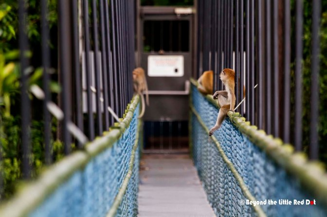 The exit door is at the end of the bridge and the Monkey Mafia was waiting to collect food from visitor before we could pass. But seriously, just ignore them and don't stare or poke them.