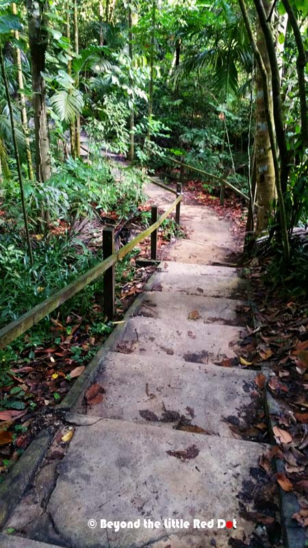 Concrete stairs and crumbling house foundations show traces of what was once a small village (kampong) that has since been abandoned and slowly being reclaimed by the forest.