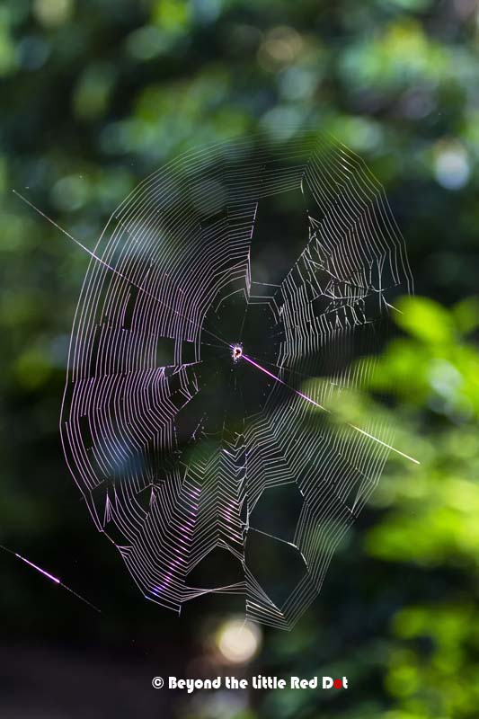 A spider web in the morning Sun.