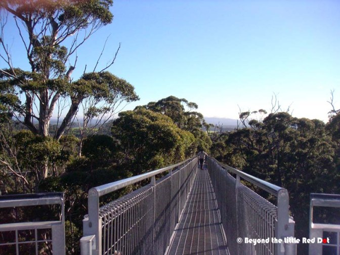 The high point of the tree top walk. It's 600m in length.