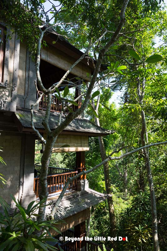 Our Treetop suite with it's valley view. We could hear the soft roar of the river flowing below.