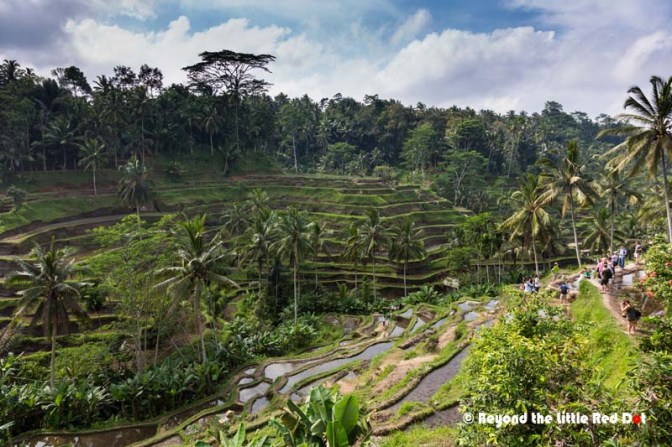 The 2 side of the valley are covered by the rice terraces making for an incredible sight.