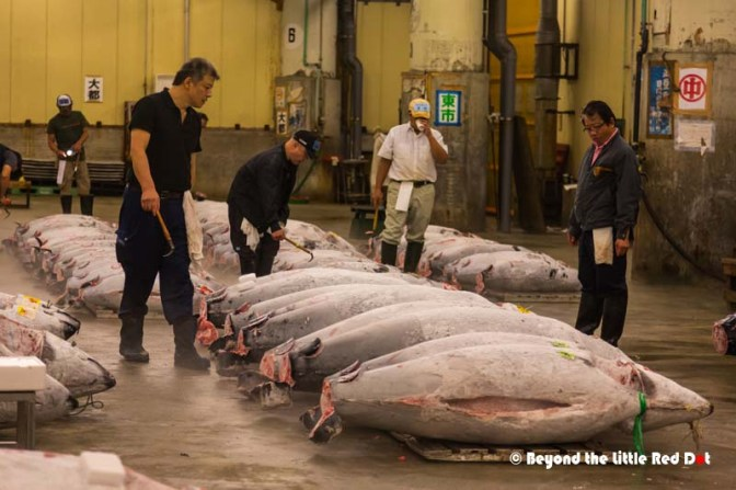 We are allowed only 20 minutes in the tuna auction area to observe. and not allowed to move out of our designated visitors' spot.