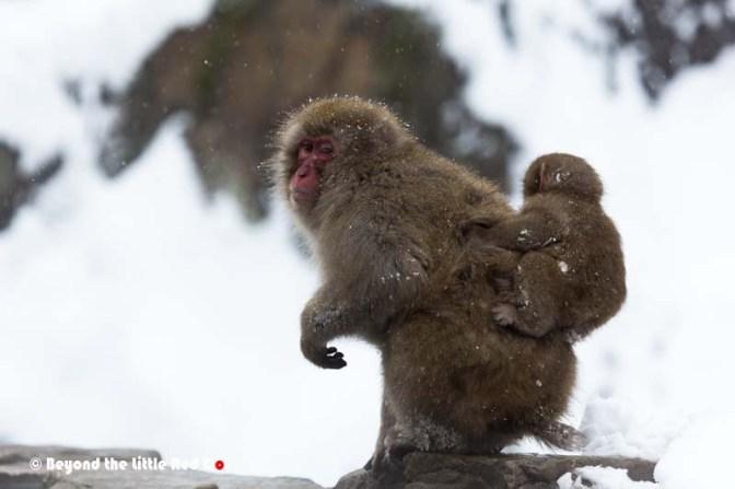 monkey5