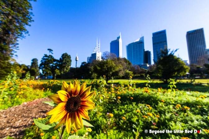 Botanic Gardens 1
