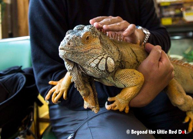 reptile4