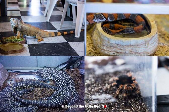 reptile6