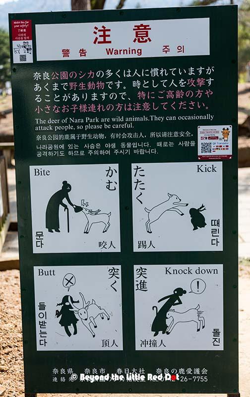 Nara6