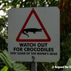 Crocodile  Spotting (And other reptiles)